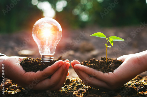 Obraz hand holding lightbulb with small tree. concept energy power in nature - fototapety do salonu