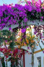 Blossom Of Ornamental Plant Bo...
