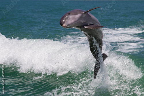 Fotografie, Obraz  Dolphins Jump out the Water