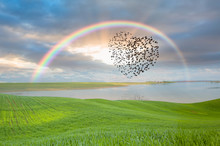 Silhouette Of Birds (Heart Of Shape) Flying Above The Green Grass Field And Lake With Rainbow