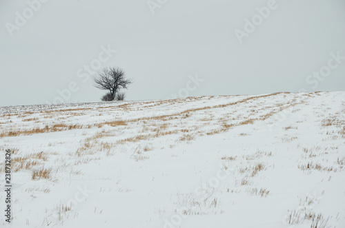 Fotografie, Obraz  Solitude, snow field alone tree on the horizon of life nature is background cata