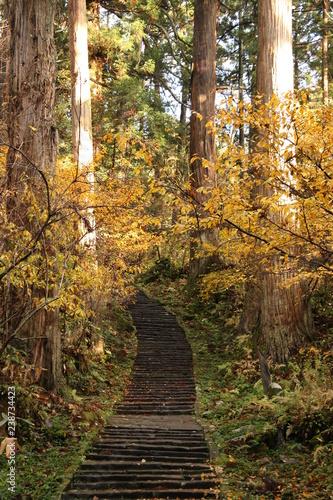 Cuadros en Lienzo alley in forest