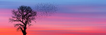 Silhouettes Of Flying Birds And Dead Tree At Sunset