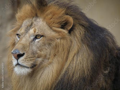 Fotografie, Obraz  みんなの動物たち