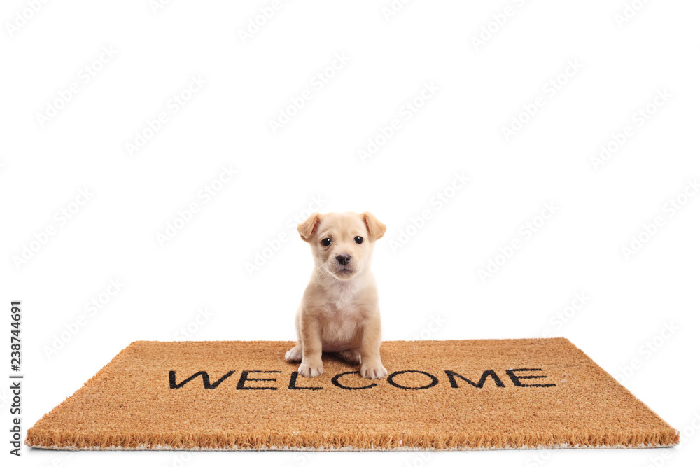 Small puppy dog sitting on a door mat with written text welcome