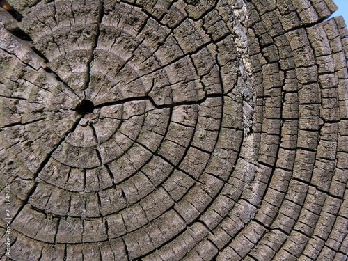 Fotografie, Obraz  interno del tronco b