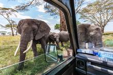 Elephants Close To Truck At Game Drive In Serengeti Africa