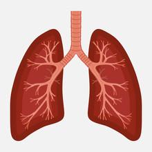 Human Lung Anatomy Diagram. Il...