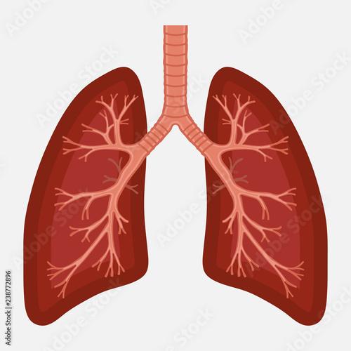 Obraz human lung anatomy diagram. illness respiratory cancer - fototapety do salonu