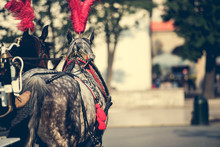 Horses Tourist Carriage For Sightseeing In Citycenter