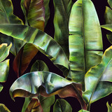 Seamless pattern with banana leaves on a dark background. Tropical background for fabrics, wallpapers, textiles. Illustration with colored pencils. - 238782443