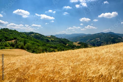 Fotografie, Obraz  Paesaggio Agricolo