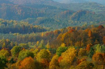 Fototapeta Las Autumn in the primeval forest. Bieszczady Mountains.