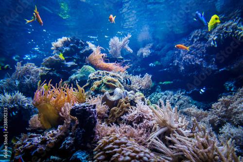 Plakat Kolorowa rafa koralowa z ryba i kamieniem