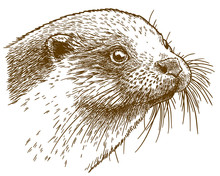 Engraving Illustration Of Otter Head