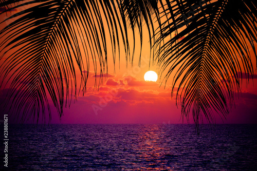 Poster de jardin Arbre Summer tropical background. Sunset at the Ocean