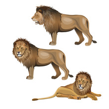 Lion Set Vector
