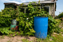 Garden Shed And Water Butts