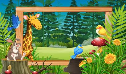 Wild animals in wooden frame