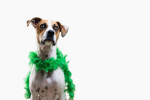 Dog Wearing Green Feather Boa