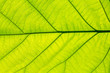 Close up of beautiful leaf texture with empty space.