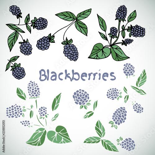 Fotografija  Berry, blackberry. set. Doodle.