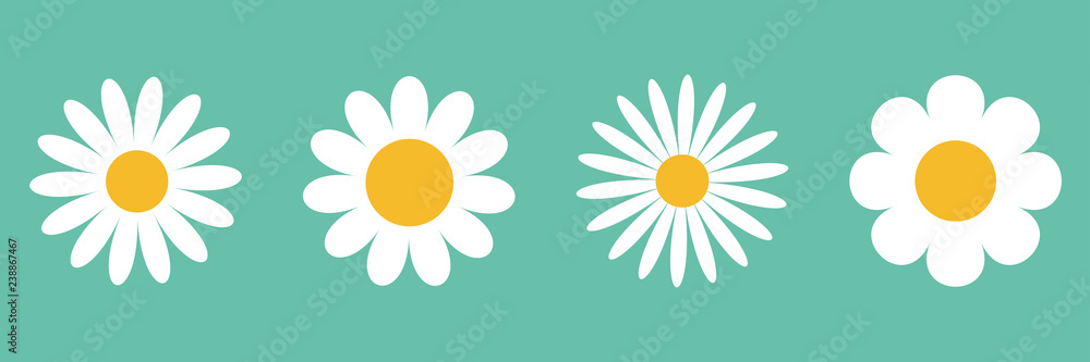 Fototapeta Camomile icon set. White daisy chamomile. Cute round flower plant collection. Growing concept. Love card symbol. Flat design. Green background. Isolated.