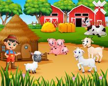 Farmer And Farm Animal In The ...