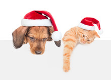 Cat And Dog With Red Christmas Hats Above White Banner Looking Down. Isolated On White Background