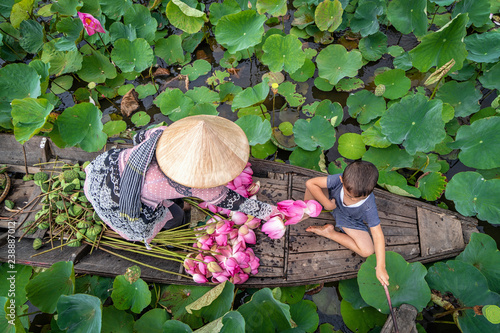 Top view of vietnamese boy playing with mom over the traditional wooden boat when padding for keep the pink lotus in the big lake at thap muoi, dong thap province, vietnam, culture and life concept