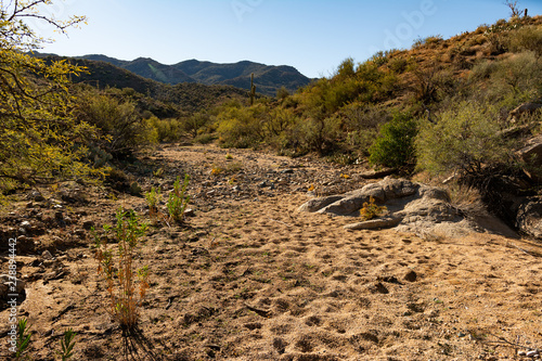 Dry wash stream bed and cactus in the arid desert near Prescott, Arizona Canvas Print