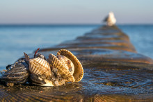 Shells On A Stage At The Baltic Beach