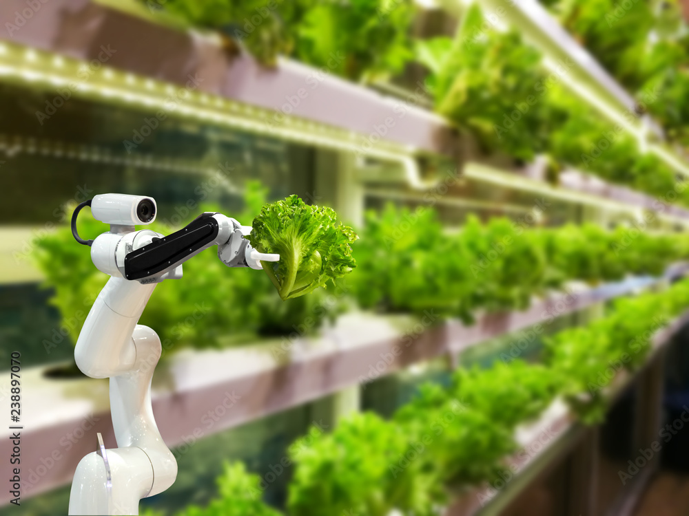 Fototapety, obrazy: Smart robotic farmers in agriculture futuristic robot automation to vegetable farm
