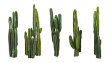 Set Of Cactus Real Plants Isol...