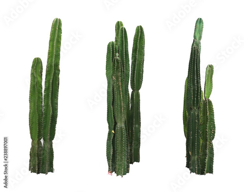 Spoed Foto op Canvas Cactus Set of cactus real plants isolated on white background
