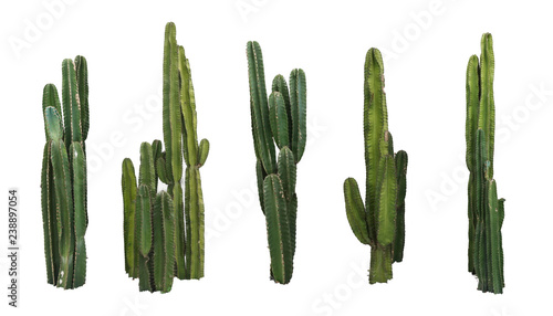Fotografija Set of cactus real plants isolated on white background