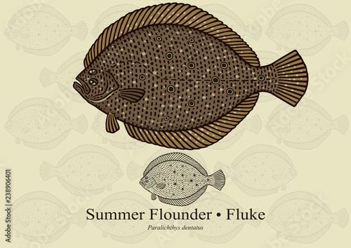 Summer Flounder Wallpaper Mural