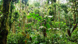 The amazon jungle in Ecuador