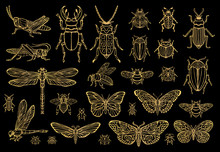 Big Hand Drawn Golden Line Set Of Insects Bugs, Beetles, Honey Bees, Butterfly, Moth, Bumblebee, Wasp, Dragonfly, Grasshopper. Silhouette Vintage Gold Silver Sketch Style Vector Illustration