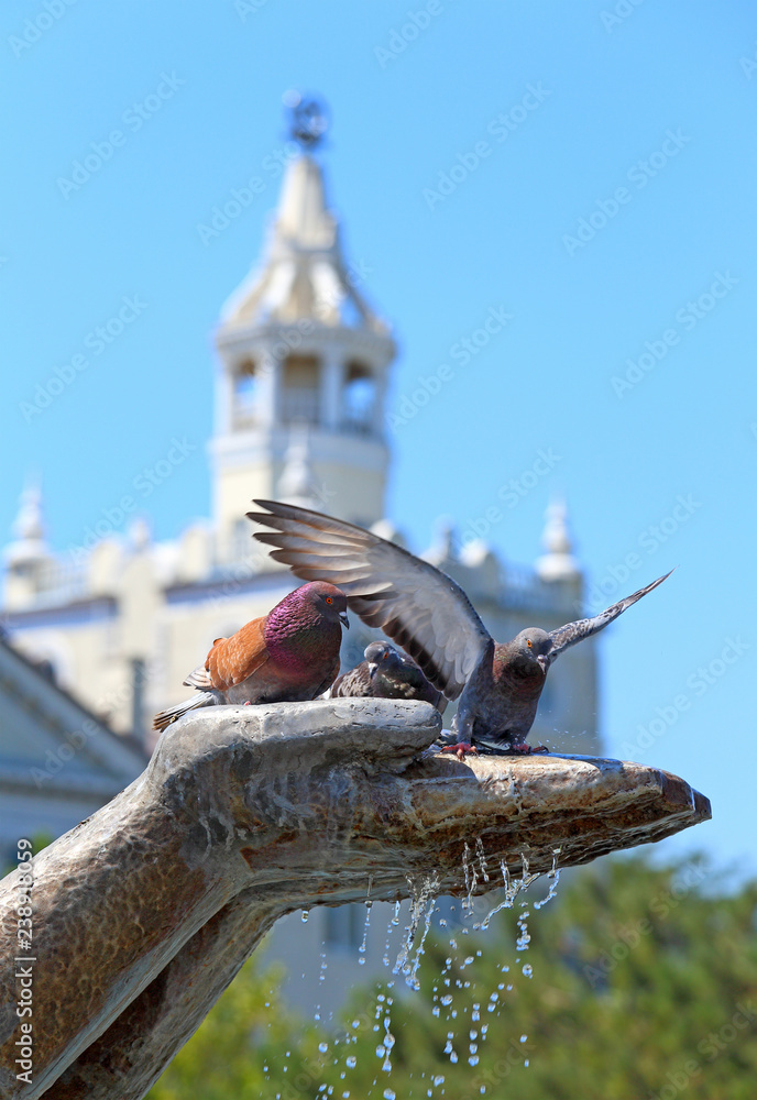 Pigeons in the hands of the sculpture of the fountain on a hot summer day in Novorossiysk