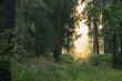 ścieżką przez las