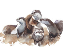 Otters Family Pack Wildlife Wa...