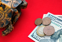 Turtle On A Red Background. Th...