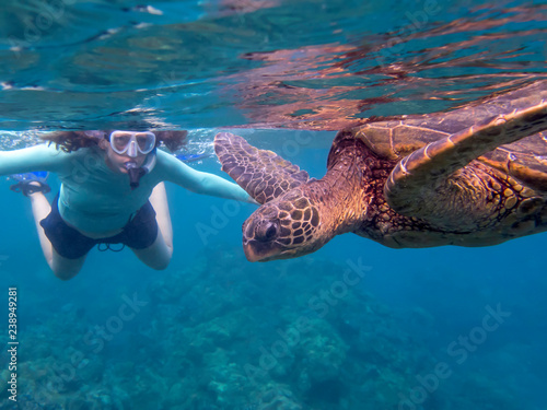 Foto op Canvas Schildpad Green Sea Turtle in Close Up Profile with Snorkeler in Background