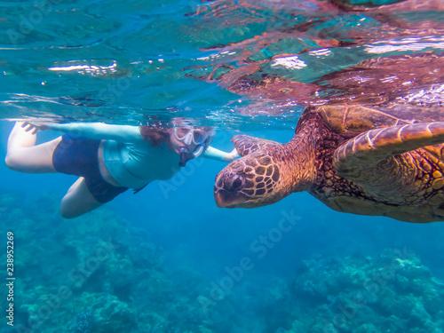 Foto op Canvas Schildpad Close Up Profile Green Sea Turtle with Snorkeler