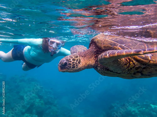 Foto op Canvas Schildpad Green Sea Turtle Close Up Profile Underwater with Snorkeler