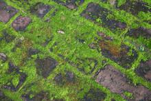 Green Moss On Paving Stones. F...