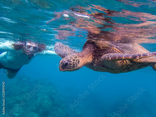 Foto op Canvas Schildpad Green Sea Turtle in Clear Blue Sea with Woman Snorkeler in Background