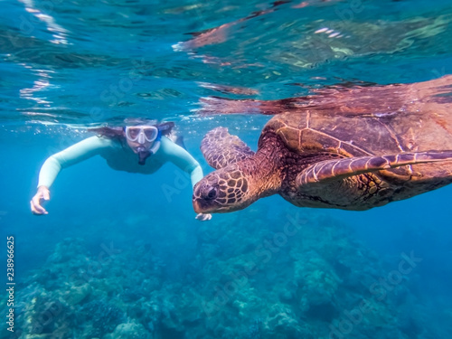 Foto op Canvas Schildpad Green Sea Turtle Close Up Profile with Snorkeler in Background
