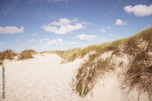 Foto  Dunes landscape with sea grass in the sand.